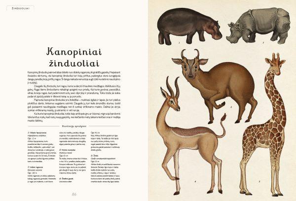 Vaikiška enciklopedija apie gyvūnys Anmalium